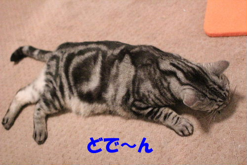 2011年10月エサ5.JPG