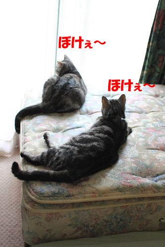 2011年10月変4.JPG