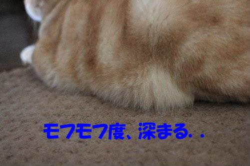 2011年10月変6.JPG