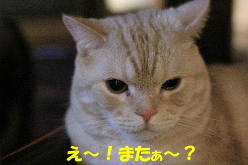 2011年10月黒目5.JPG