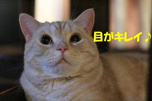 2011年10月黒目7.JPG