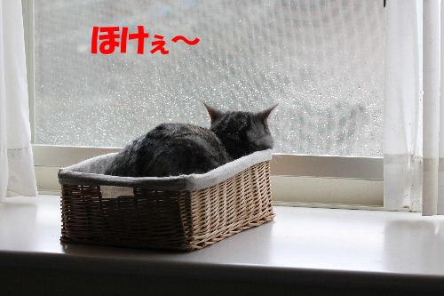 2011年10月黒1.JPG