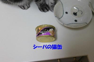2011年11月タイ2.JPG