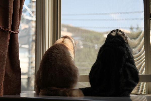 2011年11月窓1.JPG
