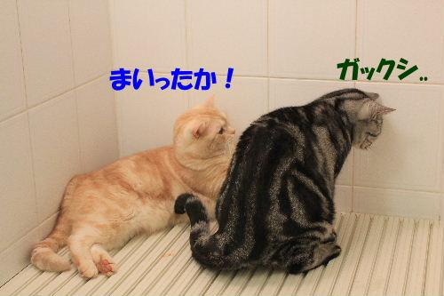 2011年12月お風呂1-3.JPG