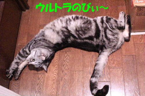 2011年12月お風呂2-3.JPG