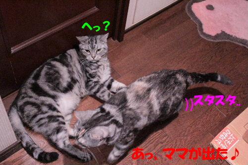 2011年12月お風呂2-6.JPG