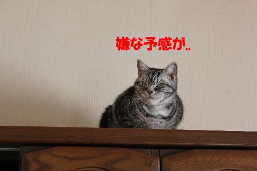 2011年12月くり2.JPG