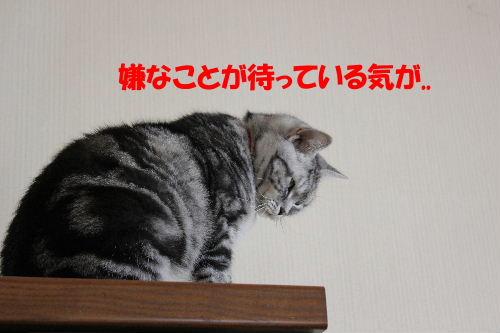 2011年12月くり2-3.JPG