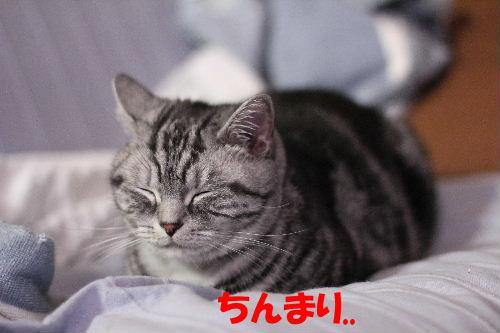 2011年12月くり5.JPG