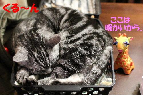 2011年12月まる3-2.JPG