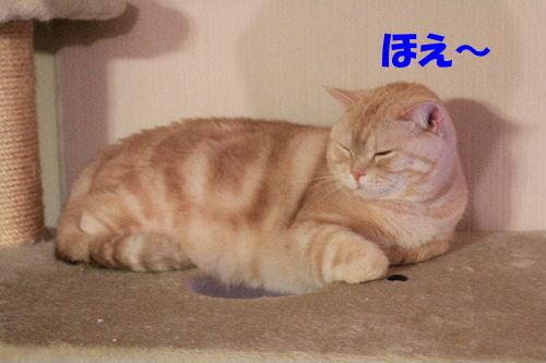 2011年12月コン3.JPG