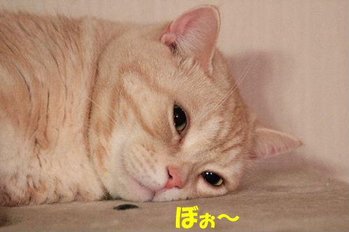 2011年12月コン4-2.JPG