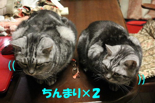 2011年12月不思議4.JPG