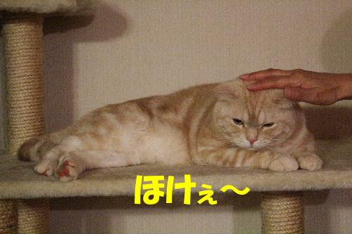 2011年12月初モフ2.JPG