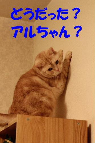 2011年12月太鼓3.JPG