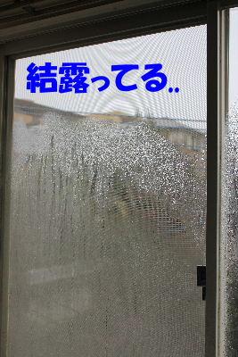 2011年12月寒1-3.JPG