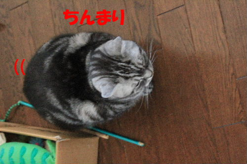 2011年12月寒3.JPG