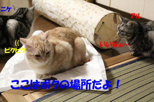 2011年12月敷く2-3.JPG