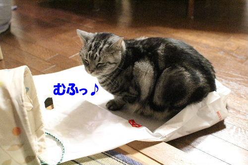2011年12月敷く3-2.JPG