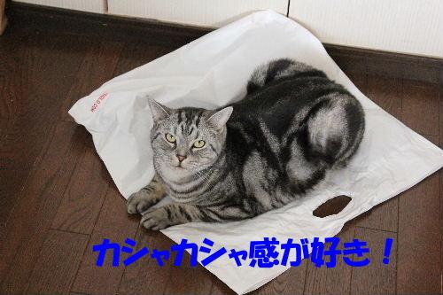 2011年12月敷く4.JPG