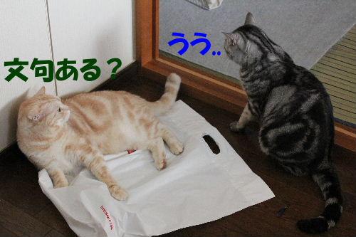 2011年12月敷く4-2.JPG