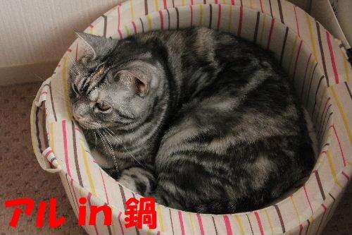 2011年12月鍋2.JPG