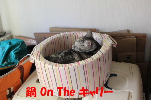 2011年12月鍋3.JPG