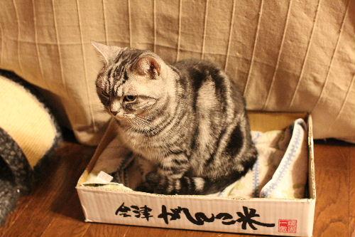 2011年1月うえ7.JPG