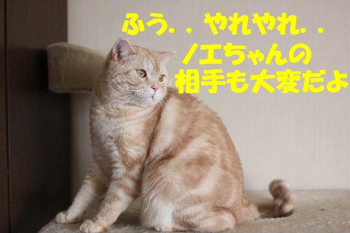 2011年1月お相手9.JPG