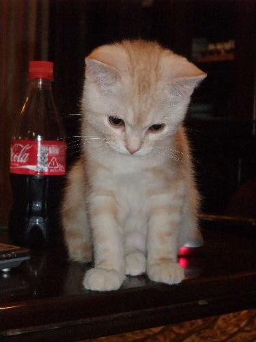 2011年1月子猫1-2.JPG