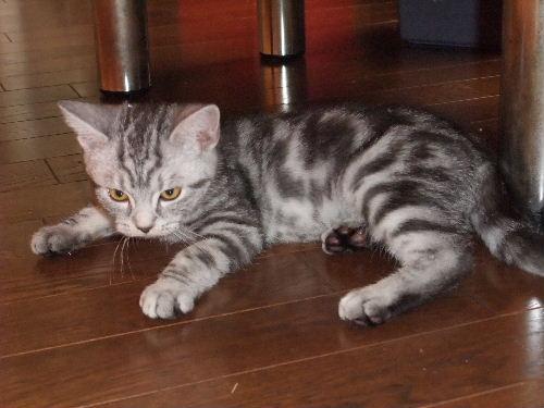 2011年1月子猫1-3.JPG