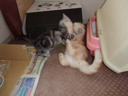 2011年1月子猫2-3.JPG