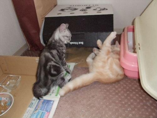 2011年1月子猫2-4.JPG