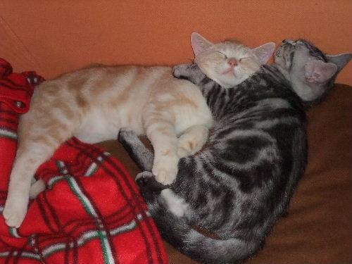 2011年1月子猫3-3.JPG