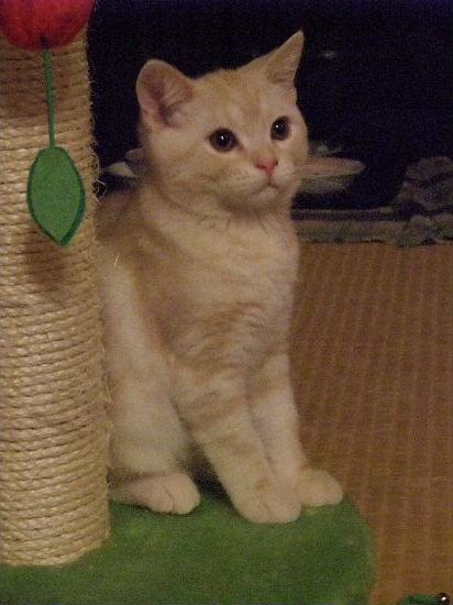 2011年1月子猫4-2.JPG