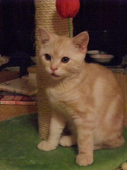 2011年1月子猫4-3.JPG
