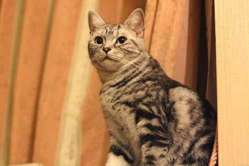 2011年1月子猫5.JPG