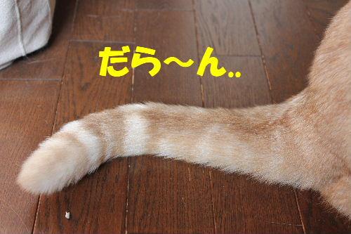 2011年4月しっぽ3.JPG