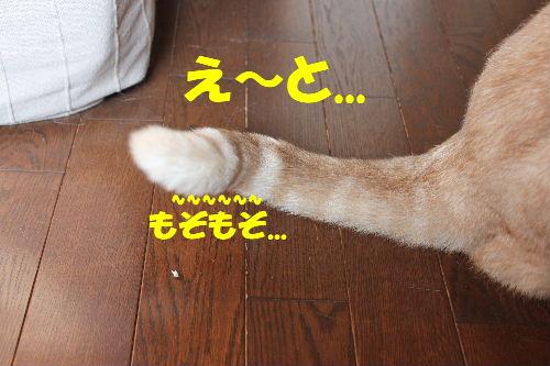 2011年4月しっぽ5.JPG