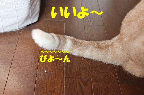 2011年4月しっぽ6.JPG