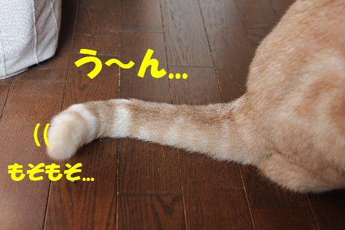 2011年4月しっぽ7.JPG