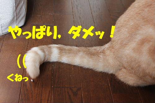 2011年4月しっぽ8.JPG