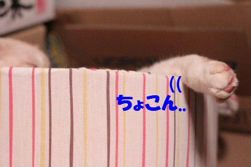 2011年4月むち2.JPG