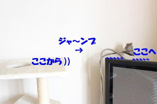 2011年4月スロー4.JPG