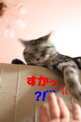 2011年4月タッチ7.JPG