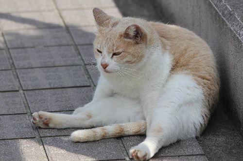 2011年4月三崎9-9.JPG