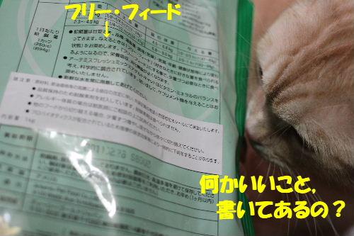 2011年4月必要3-4.JPG