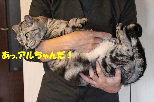 2011年4月抱っこ2.JPG