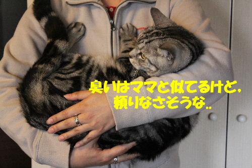 2011年4月抱っこ3.JPG